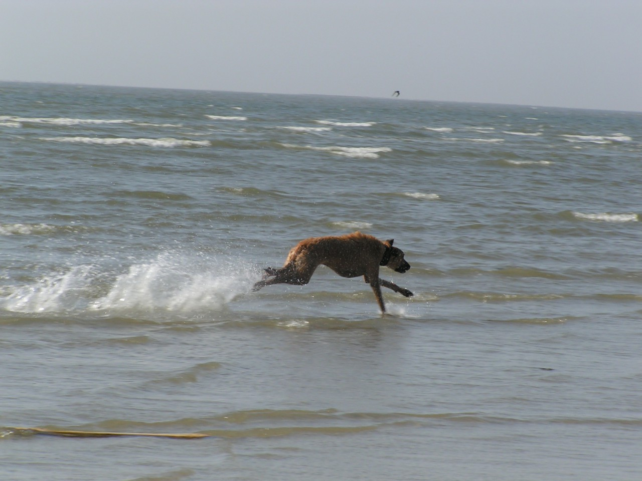 Windhunde Physiotherapie